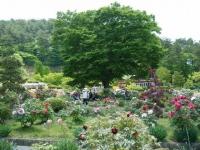 花と泉の公園・牡丹園089