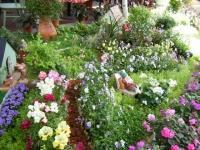 2019-05-18花と泉の公園ベゴニア館087
