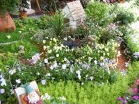 2019-05-18花と泉の公園ベゴニア館088