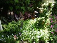 2019-05-18花と泉の公園ベゴニア館091