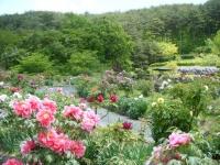 花と泉の公園・牡丹園101