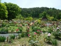 花と泉の公園・牡丹園108