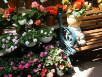 2019-05-18花と泉の公園ベゴニア館103