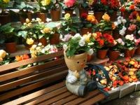 2019-05-18花と泉の公園ベゴニア館105
