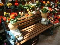 2019-05-18花と泉の公園ベゴニア館106