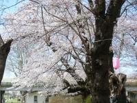 2019-04-21北上展勝地177
