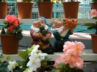 2019-05-18花と泉の公園ベゴニア館120