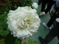 2019-06-23花巻温泉薔薇園010