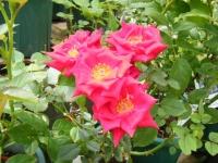 2019-06-23花巻温泉薔薇園035