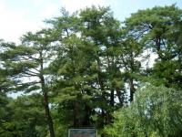 2019-07-01毛越寺あやめ祭り017