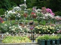 2019-06-23花巻温泉薔薇園057