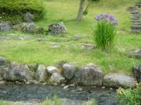 2019-06-22南方花菖蒲の郷082