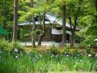 2019-07-01毛越寺あやめ祭り078