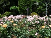 2019-06-23花巻温泉薔薇園085