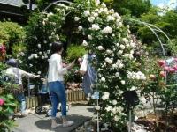 2019-06-23花巻温泉薔薇園094