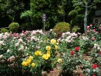 2019-06-23花巻温泉薔薇園096