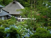 2019-07-06中尊寺ハス祭り073