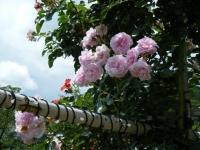 2019-06-23花巻温泉薔薇園114