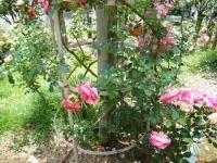 2019-06-23花巻温泉薔薇園116