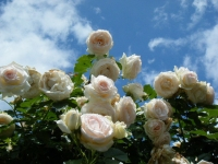 2019-06-23花巻温泉薔薇園117