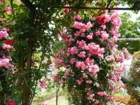 2019-06-23花巻温泉薔薇園118