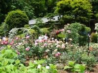 2019-06-23花巻温泉薔薇園120