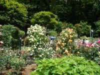 2019-06-23花巻温泉薔薇園121
