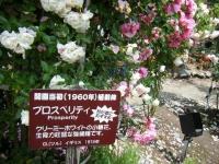 2019-06-23花巻温泉薔薇園123