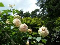 2019-06-23花巻温泉薔薇園127