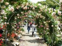 2019-06-23花巻温泉薔薇園137