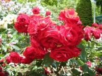 2019-06-23花巻温泉薔薇園140