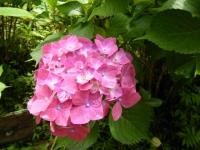 2019-07-13一関市舞川 紫陽花園125