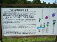 2019-07-01毛越寺あやめ祭り143