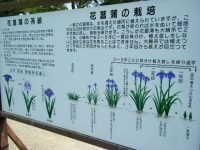 2019-07-01毛越寺あやめ祭り144