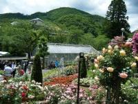2019-06-23花巻温泉薔薇園146