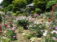 2019-06-23花巻温泉薔薇園152
