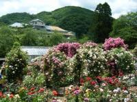 2019-06-23花巻温泉薔薇園155