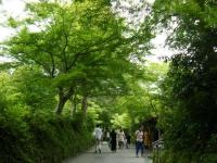 2019-07-06中尊寺ハス祭り137