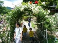 2019-06-23花巻温泉薔薇園159