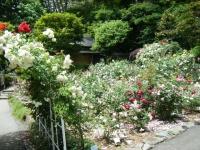 2019-06-23花巻温泉薔薇園160