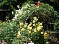 2019-06-23花巻温泉薔薇園163