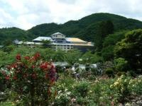 2019-06-23花巻温泉薔薇園164