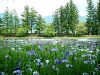 2019-07-01毛越寺あやめ祭り164