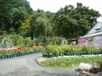 秋の花巻温泉街バラ園2019-09-28-02