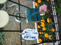 2019-06-23花巻温泉薔薇園173
