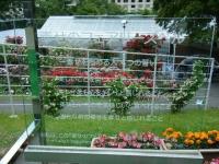 2019-06-23花巻温泉薔薇園175