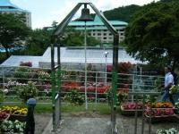 2019-06-23花巻温泉薔薇園178
