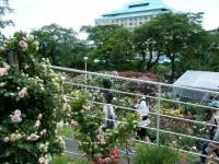 2019-06-23花巻温泉薔薇園180