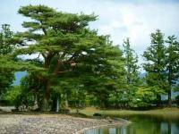 2019-07-01毛越寺あやめ祭り171