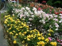 2019-06-23花巻温泉薔薇園184